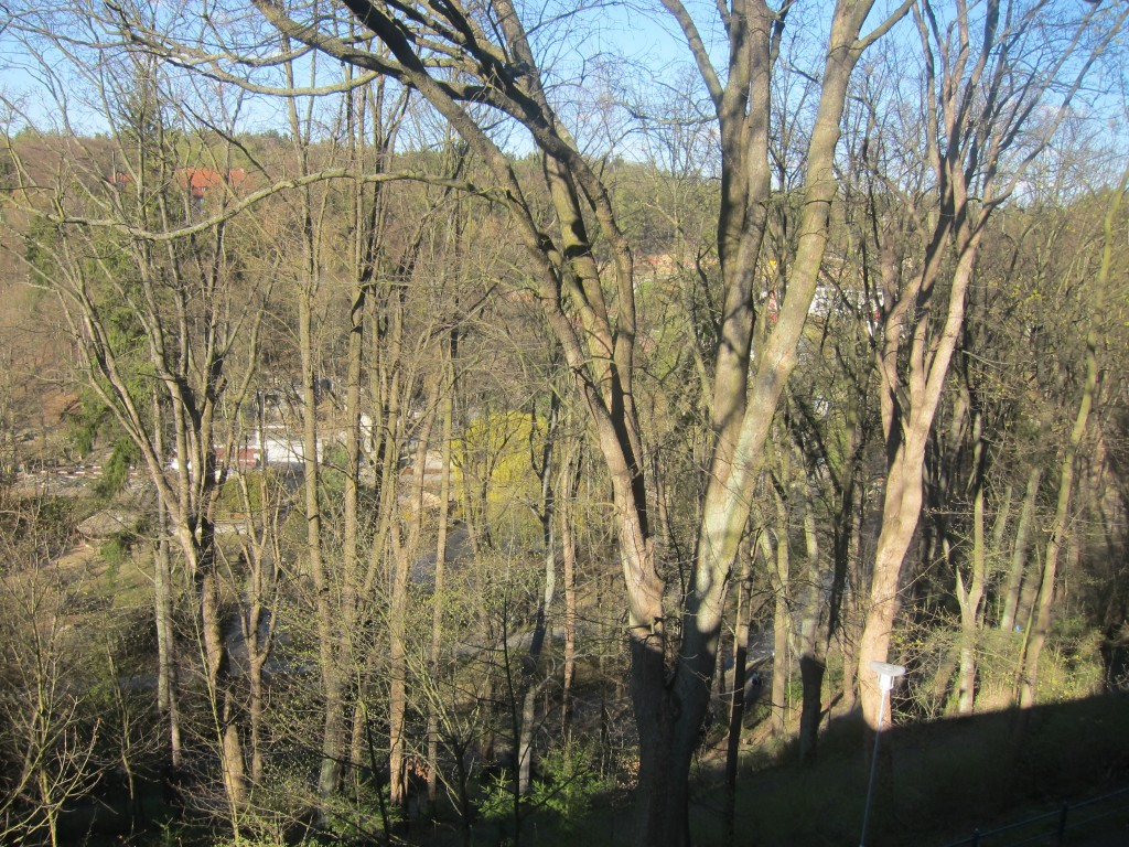 Views of the tress from the top of the wall.